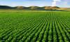 Talajvédelem  mezőgazdasági pályázatok segítségével