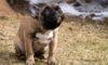 Kutya webshop kedvező árakkal